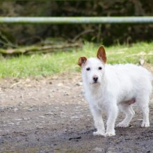 White dog at the gate of West Moor Farm Ilkleu
