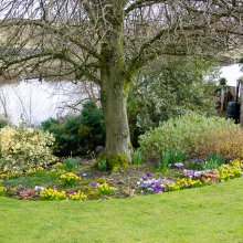 A pretty garden with spring flowers